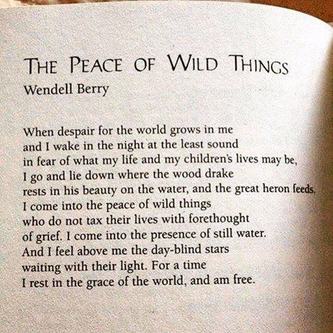 peace-of-wild-things