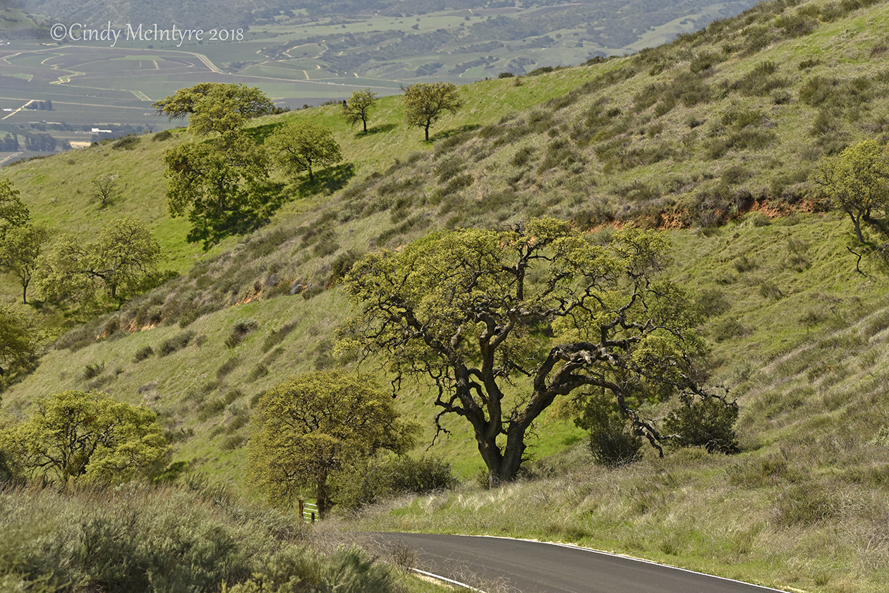 Road to Pinnacles NP West side, CA (1) copy